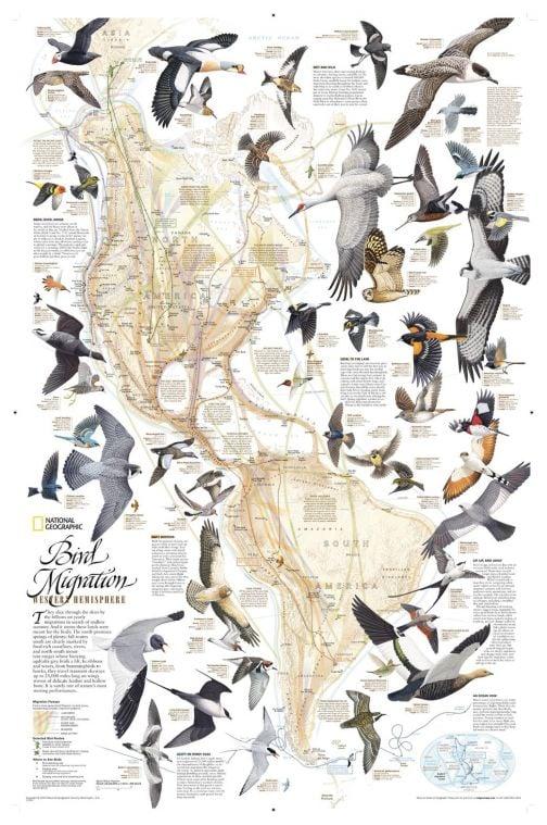 Bird Migration Western Hemisphere Map