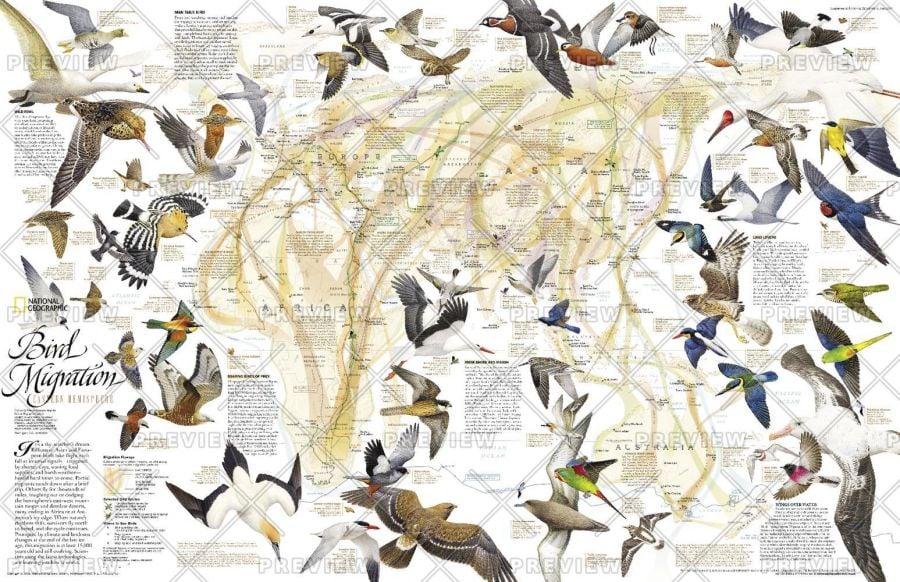 Bird Migration Eastern Hemisphere Published 2004 Map